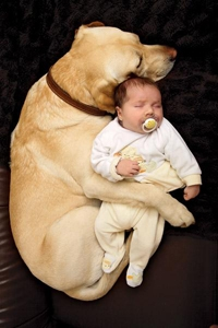Photo of a dog cuddling a baby